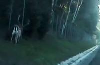 Policjanci pomogli zagubionemu jeleniowi