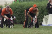 Psia rywalizacja na Hipodromie