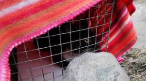 Akcja ratunkowa kota