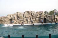 Delfinarium Batumi GRUZJA georgia dolphins Variustur