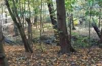 Wycinka lasu w gdansku dla ...