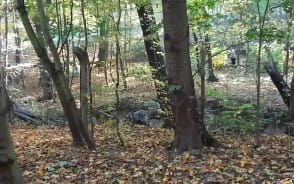 Wycinka lasu w Gdańsku