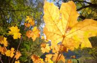 Piękny jesienny Kamienny Potok