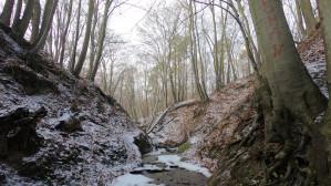 Zimowy spacer Jarem Sweliny