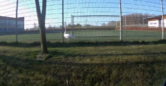 Łabędź na boisku SP 12 w Gdańsku