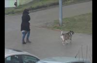 Sprzątaj po psie, kobieto!
