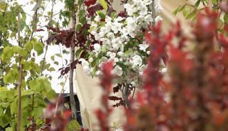 Targi, Wiosna w ogrodzie
