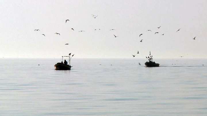 Masz ochotę na świeżą rybę? Zobacz materiał TV Borysa Kossakowskiego zprzystani rybackiej wSopocie.