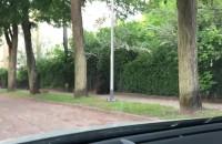 Dziki na ulicy Abrahama - chwilę po ...