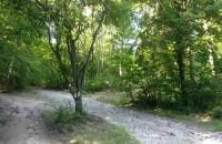 Spokojny spacer w lesie. Przy ...