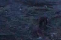 Foka przy plaży w Gdyni