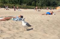 1 września na plaży Mewa z parciem na szkło
