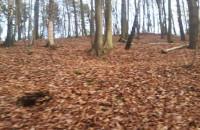 Śmieci w lesie na Małym Kacku
