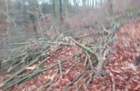 Wycinka drzew w lesie na granicy ...