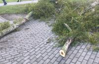 Powalone gałęzie na Witominie