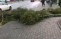 Gałęzie spadły przez wichurę na Witominie