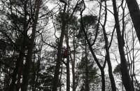 Kot ściągany z 30-metrowego drzewa