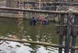 Strażacy wyławiają ciało znalezione w kanale Raduni