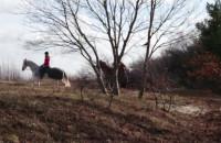 Konie na plaży w Sopocie