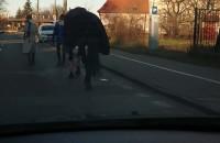 Mały ruch na drodze to i można zabrać konia na spacer