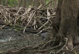 Niezwykła drewniana konstrukcja powstała w sopockim rezerwacie przyrody