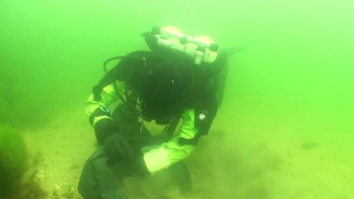 Tak sprzątają dno zatoki członkowie Klubu Hokeja Podwodnego Bałtyckie Foki.