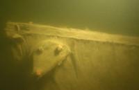 Wydobycie XVIII-wiecznego wraku z dna Martwej Wisły