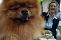 Psy i właściciele. Podobni?