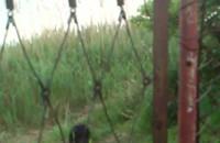 Bobry na Wyspie Sobieszewskiej