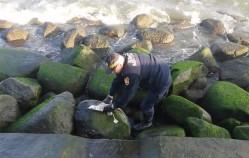 Strażnik uratował uwięzioną mewę