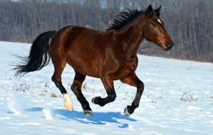 Konie: pasja, ale i odpowiedzialność