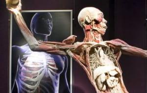Wypreparowane ludzkie zwłoki na wystawie w Gdańsku