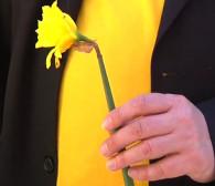 Pola nadziei w Trójmieście: ulice pełne żonkili
