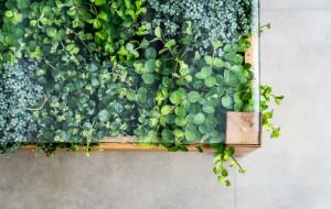 Jak stworzyć w mieszkaniu namiastkę zimowego ogrodu?