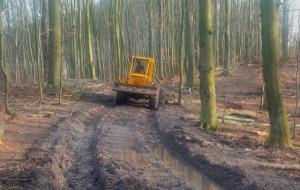 Trójmiejski Park Krajobrazowy czy fabryka drewna?