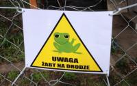 Gdańsk pomaga żabom i ropuchom