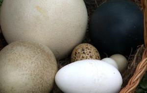 Takich jajek na oczy nie widzieliście