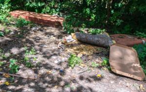 Park w Działkach Leśnych sprzątany tylko doraźnie