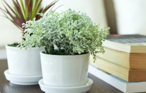 Rośliny domowe usuwają toksyny z powietrza