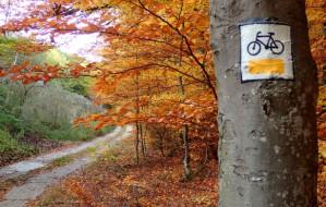 Szlak rowerowy między Chwarznem a Dąbrową
