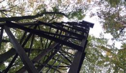 Leśna wieża: zapomniany relikt lotniska we Wrzeszczu