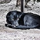 Niebezpieczne psy na Krakowcu. Czworo zaatakowanych w lutym