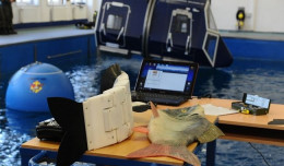 Cyberryba pływa w Gdyni