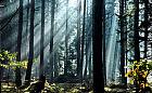 Spotkanie ws. wycinki drzew w trójmiejskich lasach