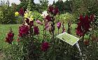 Niezwykły ogród w centrum miasta. A w nim opowieść o pszczołach