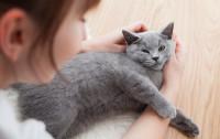 Czy dobrze dbasz o swojego kota?