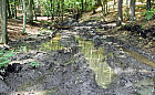 Eksploatacja lasów wokół Trójmiasta oczami Borsuka