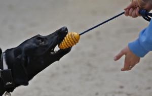 Gdzie w Trójmieście wyszkolić psa?