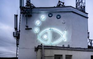 Neonowa rybka przeszkadza mieszkańcowi Gdyni