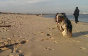 Sopot: zaskarżony zapis o zakazie wprowadzania psów na plażę